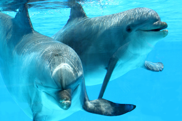 Swim with the Dolphins at Dolphin Cove